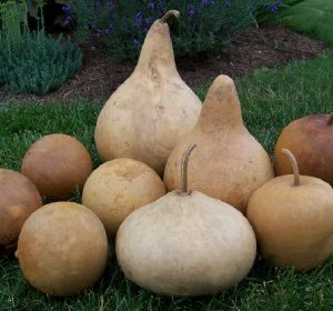 Box of Mixed Gourds (9 qty) - washed