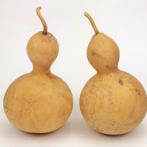 """10 Mini bottle gourds Good Shape dry and clean 2./"""" High"""