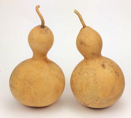 chinese bottle gourd 4 5 diameter small amish gourds