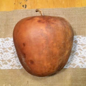 "Apple Gourd (4"" - 6"" across) medium"