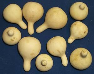 Spinner Gourds Box of 75