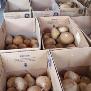 Big Fun Box of 14 Gourds
