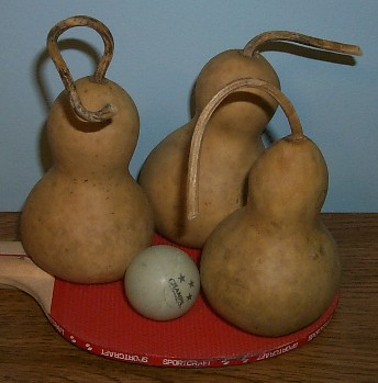 "Chinese Mini-Bottle Gourd (2""-3"" diameter) Box of 20"