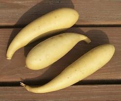 Banana Gourd