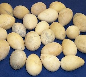 Egg Gourds Box of 50