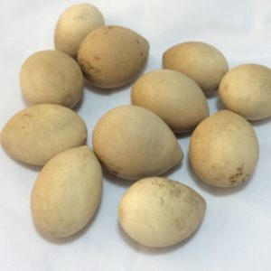 Irregular Egg Gourds Box of 100